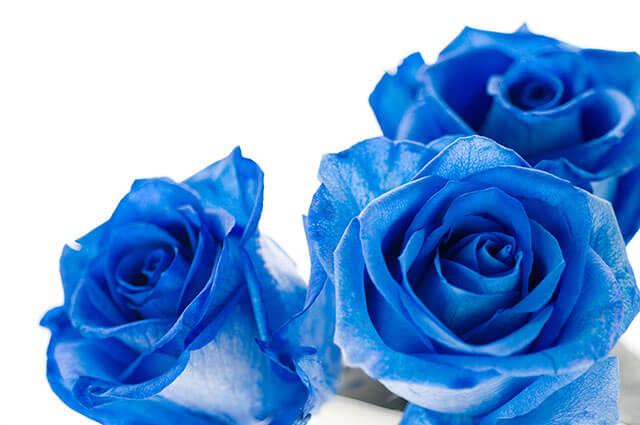 青いバラの花