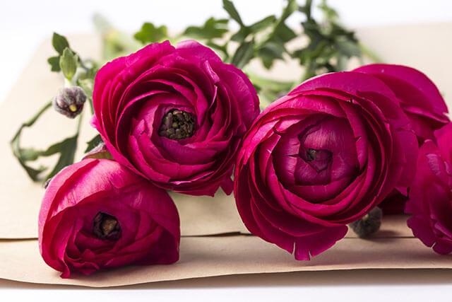 結婚式の花ラナンキュラス